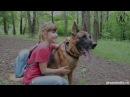 Немецкая овчарка Гилмор спасает девочку от хулигана German Shepherd Gilmore protect girl