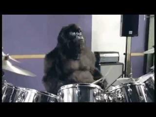 Gojira & Liviu Vasilica - Robot Armasar Attack (Gorilla Drumming)