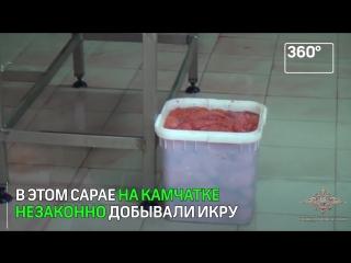 3,5 тонны опасной икры изъяли на Камчатке