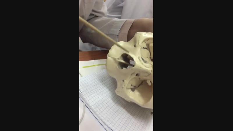 мурын шункыры