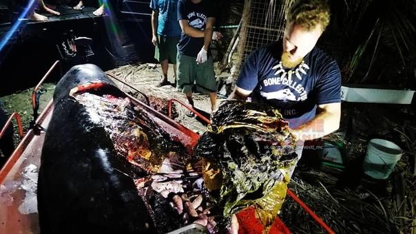 Ада нет. Кроме того, что создали мы. В желудке выброшенного на берег кита-клюворыла на Филиппинах нашли 40 килограммов пластиковых пакетов. Биологи, которых вызвали на место происшествия для