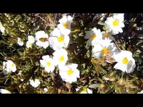 Весна в Испании цветущие кустарники олива европейская красивая природа и музыка 28 04 2018