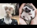 Những em bé sơ sinh dễ thương nhất thế giới loài vật NHìn cưng quá trời Đảm bảo không tốn thời gian