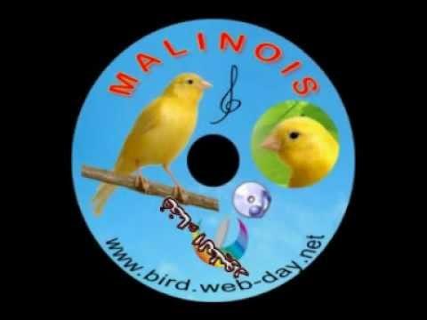 المالينوا-CHANT DE MALINOIS (CD)