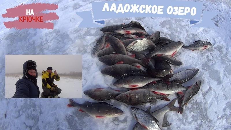 Крупный улов. Зимняя рыбалка НА ЛАДОГЕ на окуня🐠, плотву🐟 и порушину одну🎣))