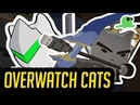 Katsuwatch Dragons"