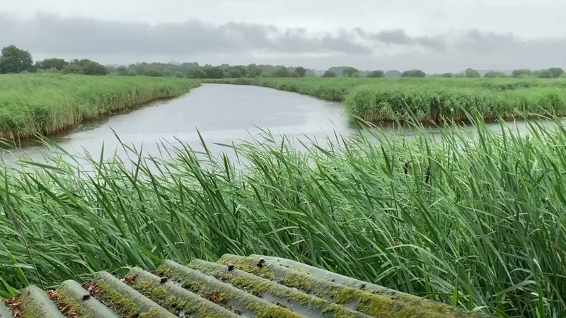 Light Rain on a Tin Roof w Wind Blowing Through the Reeds in the English Wetlands Relax Sleep