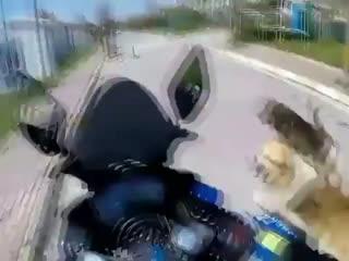 Собаки они такие