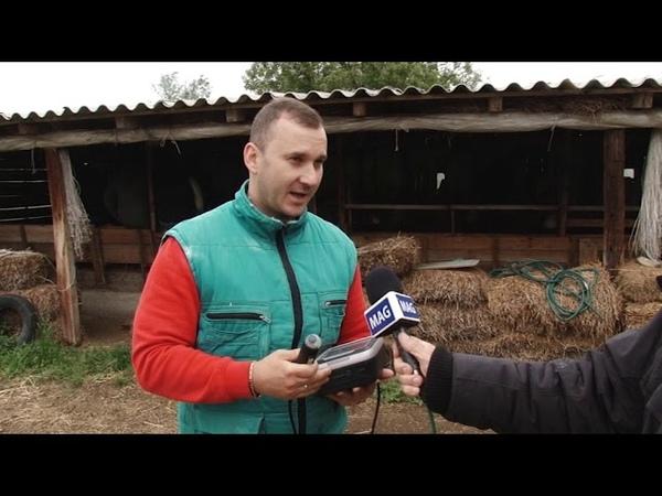Savet stručnjaka dr Kostić