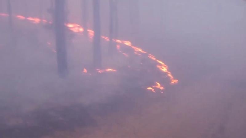 Пожар возле Гожи