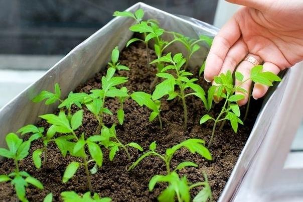 Ценная помощь для растений