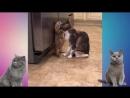 Смешная нарезка про котов.