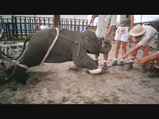 Как в цирке убивают животных