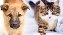 Кошка повела замёрзшего щенка за собой на оживлённую тропинку, ведущую к людям и теплу