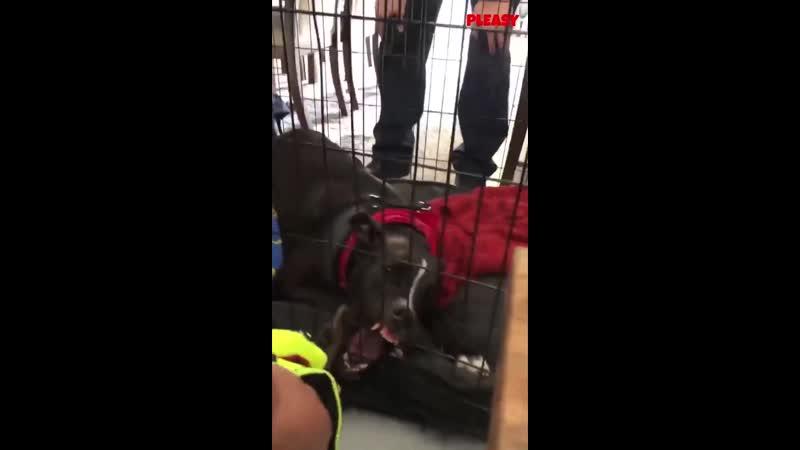 спасение застрявшей собаки
