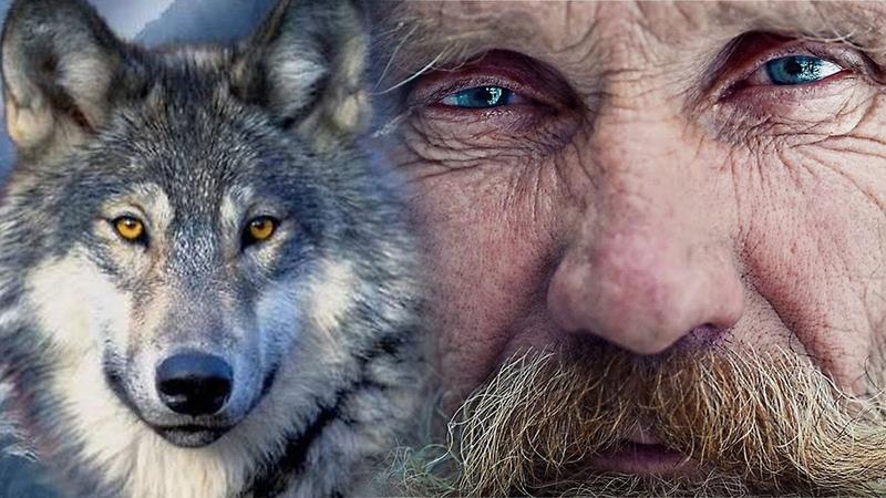 Волк вернул доброе имя знахарю, которого оклеветали деревенские сплетники