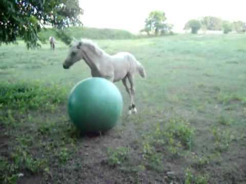 жеребенок и надувной мяч.flv