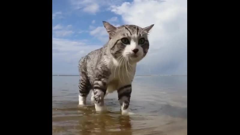 Морской патруль 😼 | Мир Кошек