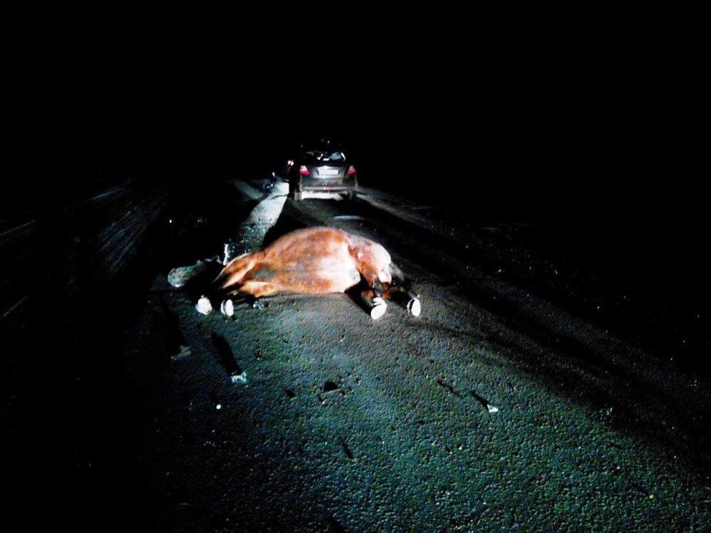 Из-за лошади-беспризорницы жительница Черкесска попала в больницу