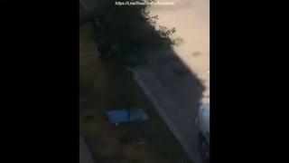 ЧП. Полиция против питбулей на дороге  Accident. Police vs pit bulls on the road