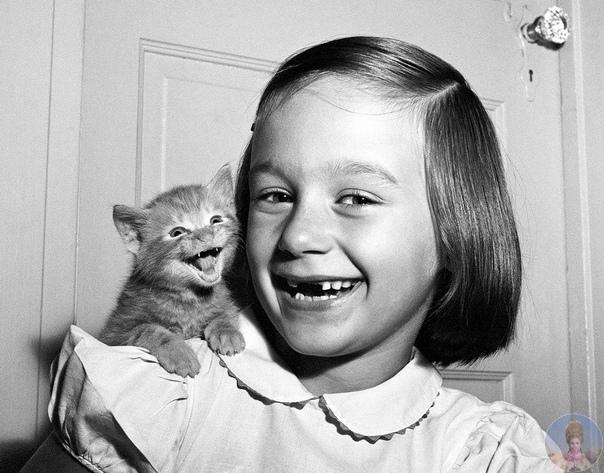 Уолтер Чандоха 70 лет фотографировал кошек