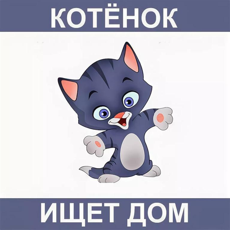 котята в добрые руки картинка надпись открытки для