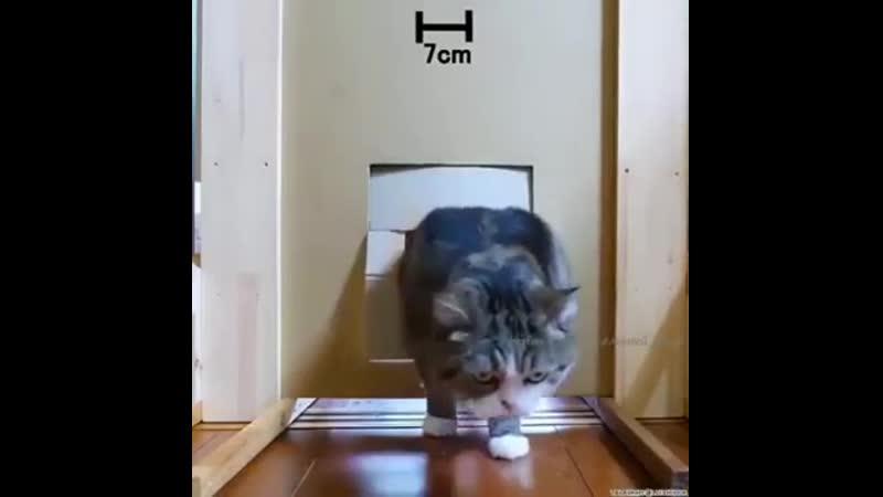 Кот соображает лучше людей
