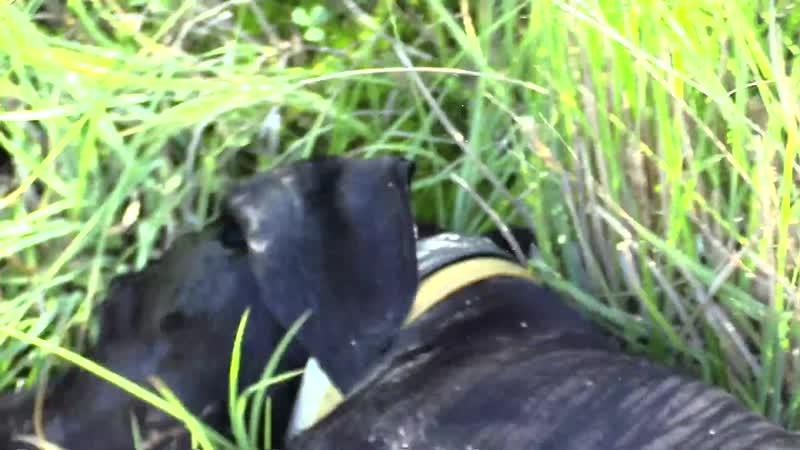 Охота с легавой в московской области (Охотничьи меридианы)- Беляков Хантинг