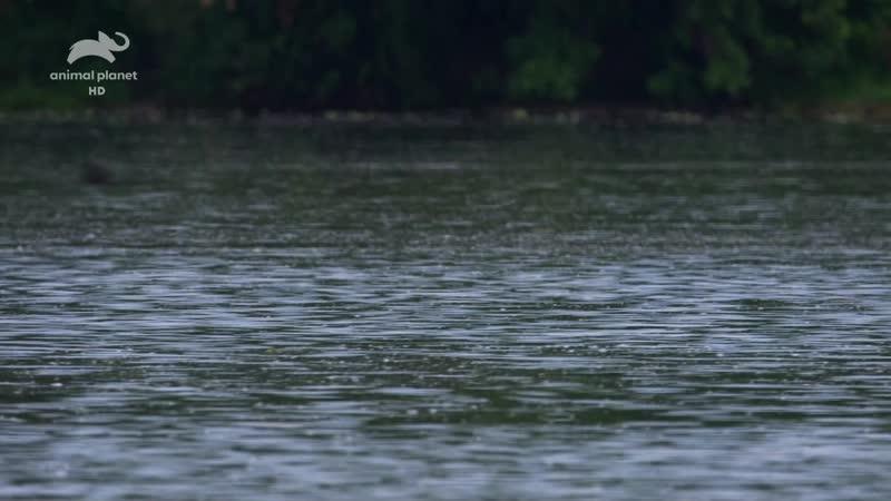 Дикие реки Африки Нил