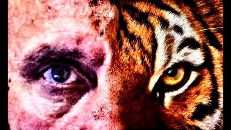Михаил Владимирович Тигр на Лига бокса Воронеж Ратибор Борисоглебск Стиль тигра бокс Бокс стиль