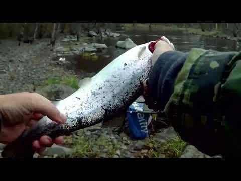 🎣 Весна рыбалка на Ладоге🐟