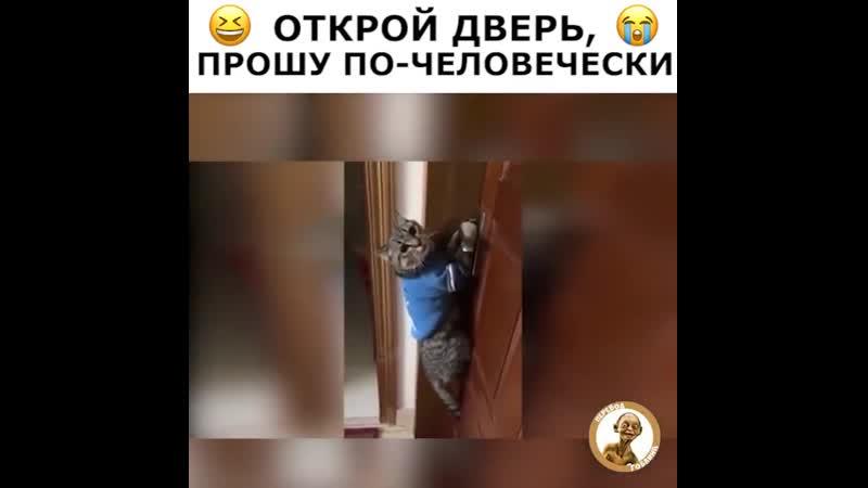 VIDEO 2019 11 19 12 02