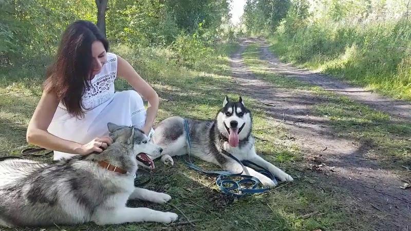 Фотосессия Иделии/Иджина .Photo session with husky huskyIdel