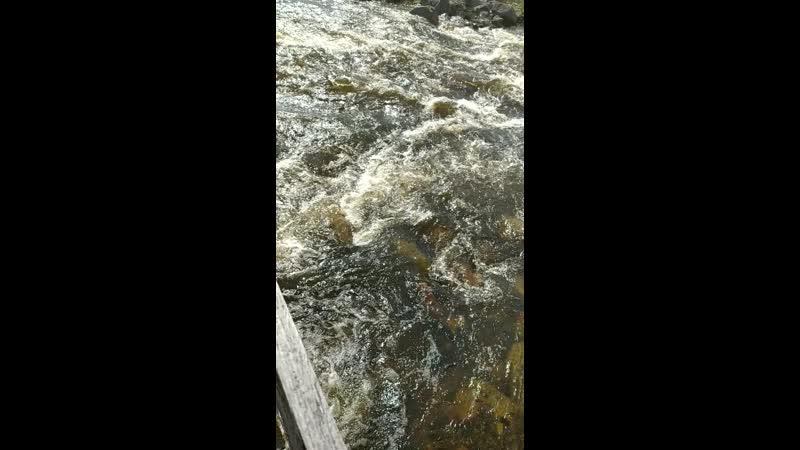 Жизнь течёт как река