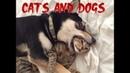 Кошки с собаками встречаются первый раз