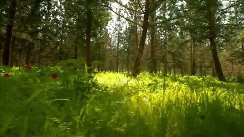 Простила!Песня на стихи Н Аникеевой и муз Н Жукова,поет Г Погорельская