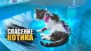 Спасение котика с раной на шее SANI vlog