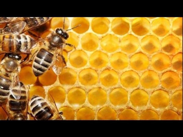 Отстройка сот пчелами в колоде через 6 дней, Encroachment