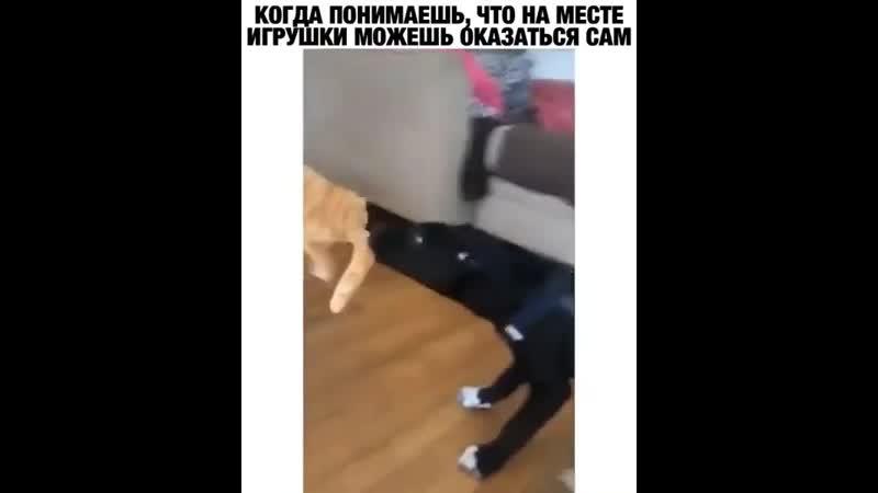 Бедный котик главное что бы собаки не перепутали 🙈