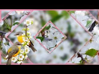 Ой ты вишни  белый цвет!!!С весной  вас дорогие друзья поздравляет группа Успех!!!