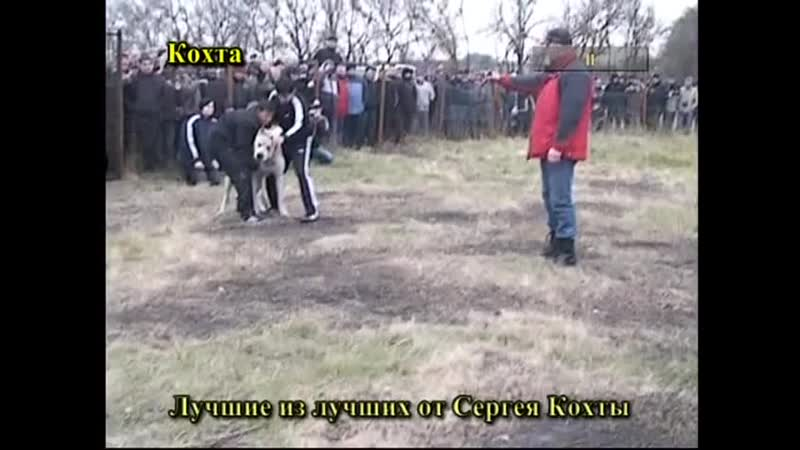 Шункар Топаз 2раунд