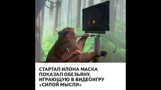Стартап Илона Маска показал обезьяну, играющую в видеоигру «силой мысли»
