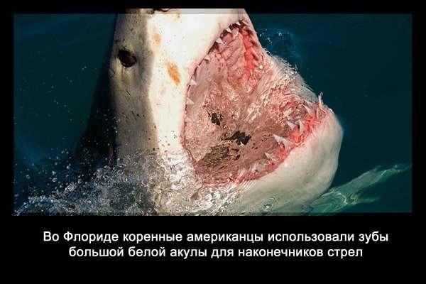 валтея - Интересные факты о акулах / Хищники морей.(Видео. Фото) DrC1mAZdOVA