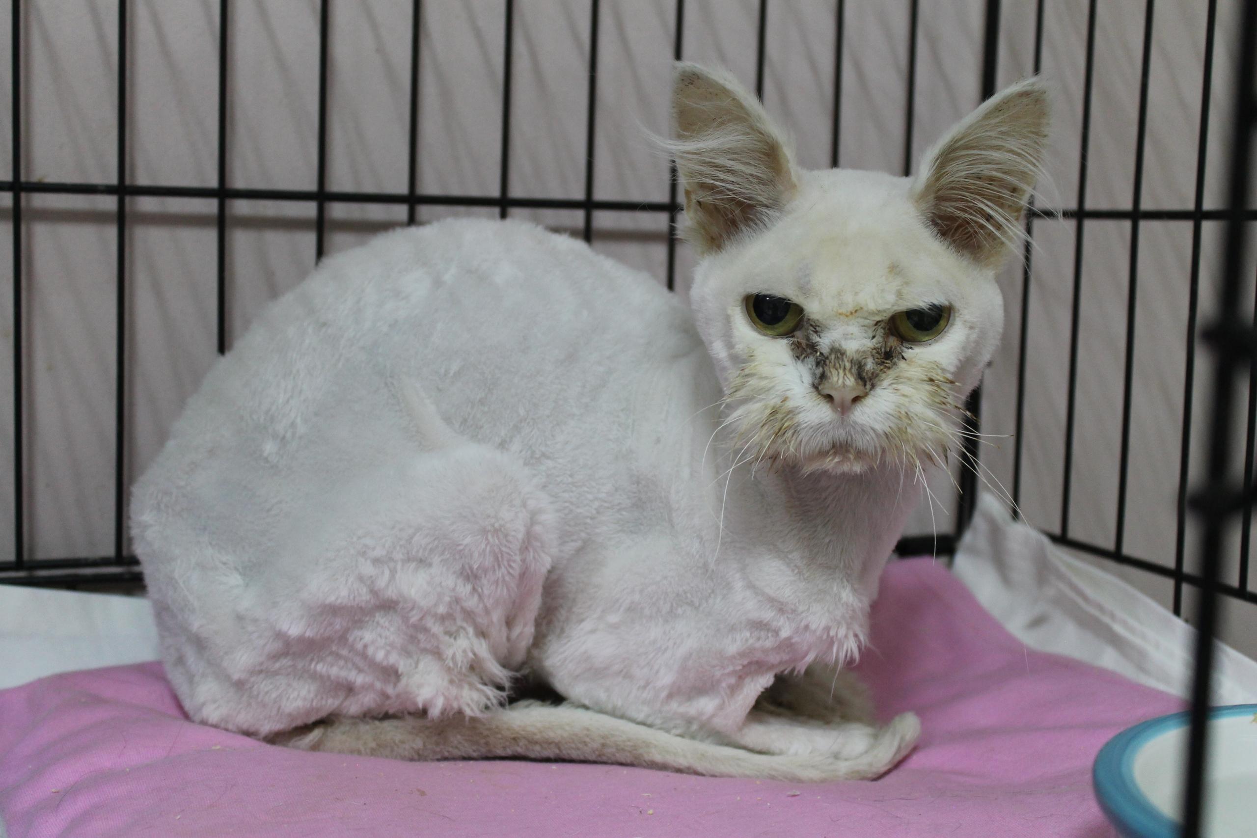 лечение кошек фото