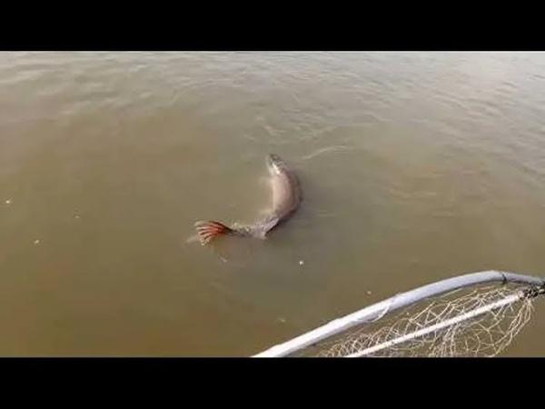Рыбалка в Аксае на лодке Яйца или Фидер Ловля бешенного сазана