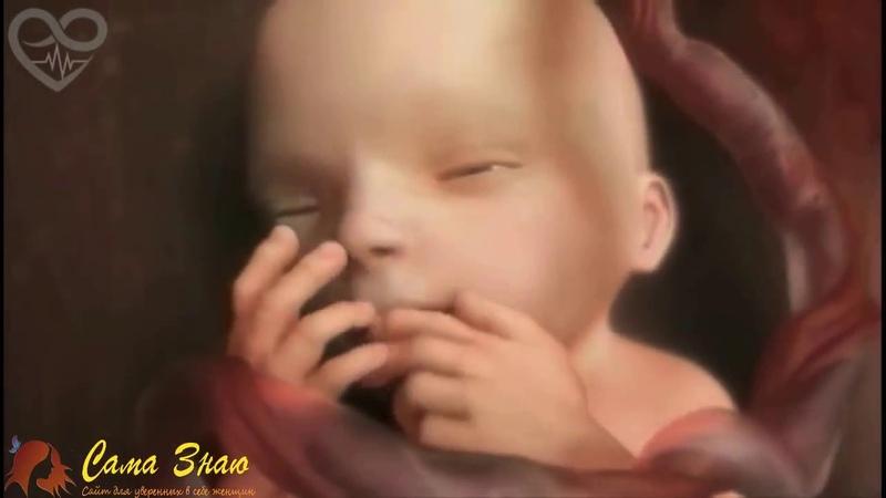 Жизнь в утробе матери 9 месяцев за 4 минуты