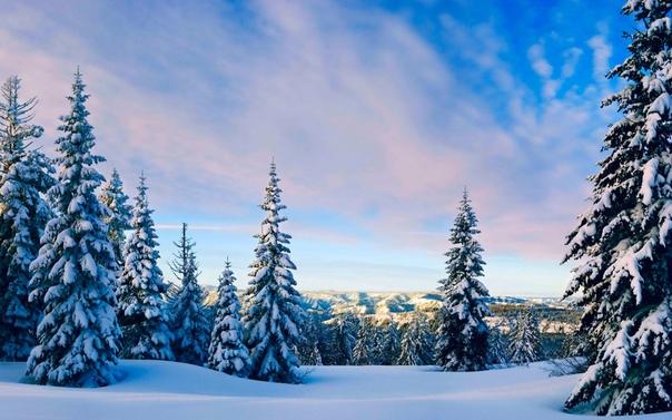 Зимний Лес Обои По Размеру Экрана