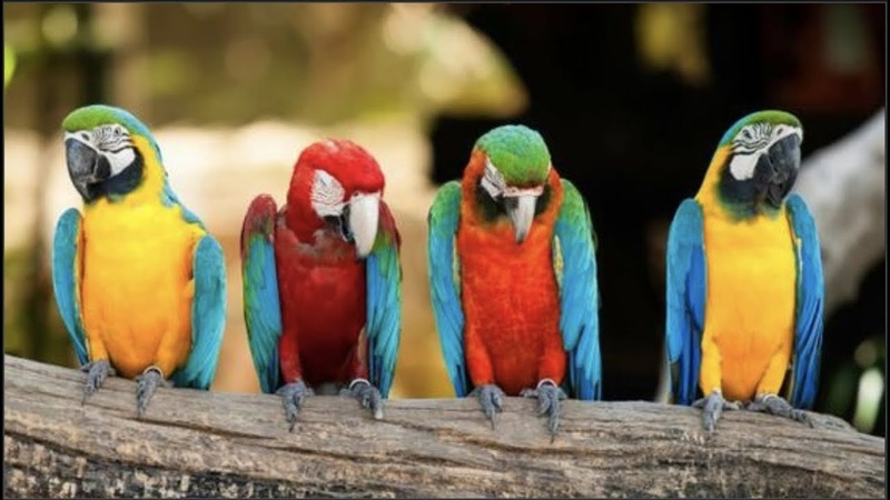 Cute Parrots Videos Compilation cute moment of the animals Soo Cute 7
