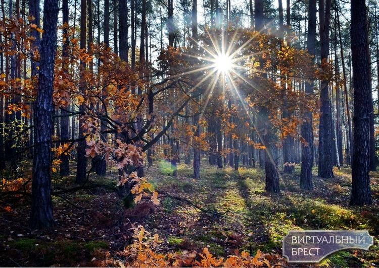 """Нас просто """"завалили"""" грибами... Страдайте и вы от этой красоты леса и природы"""