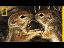 Squirrels Just Wanna Have Fun | America's National Parks